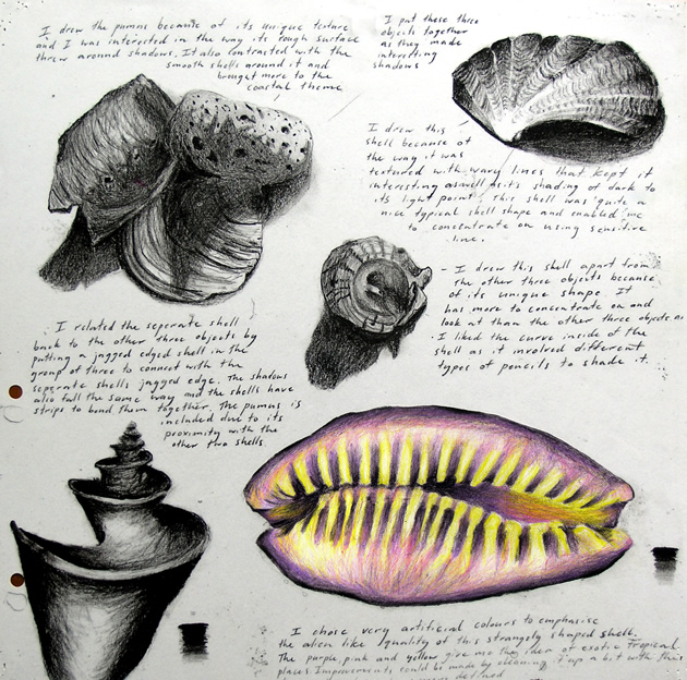 shell-drawings-sketchbook.jpg
